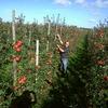 Een-appelboom-op-school;-Ekoplaza-maakt-het-mogelijk!